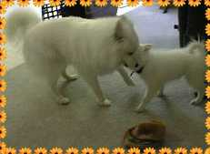 Punchy and Cheyenne playing